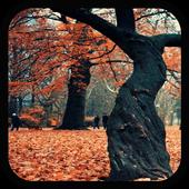 Galaxy S5 Autumn LiveWallpaper icon