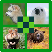Guess the Animal 100 Pics Quiz icon