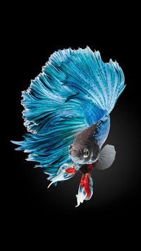 Betta Fish HD Wallpapers apk screenshot