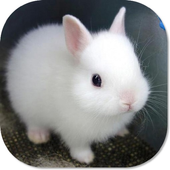 Cute Bunny HD Wallpapers icon