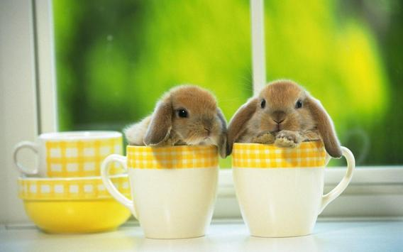 Cute Bunny HD Wallpapers poster