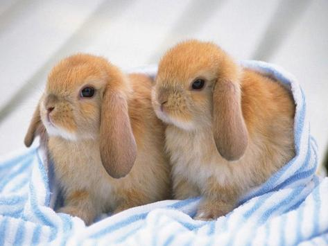 Cute Bunny HD Wallpapers apk screenshot