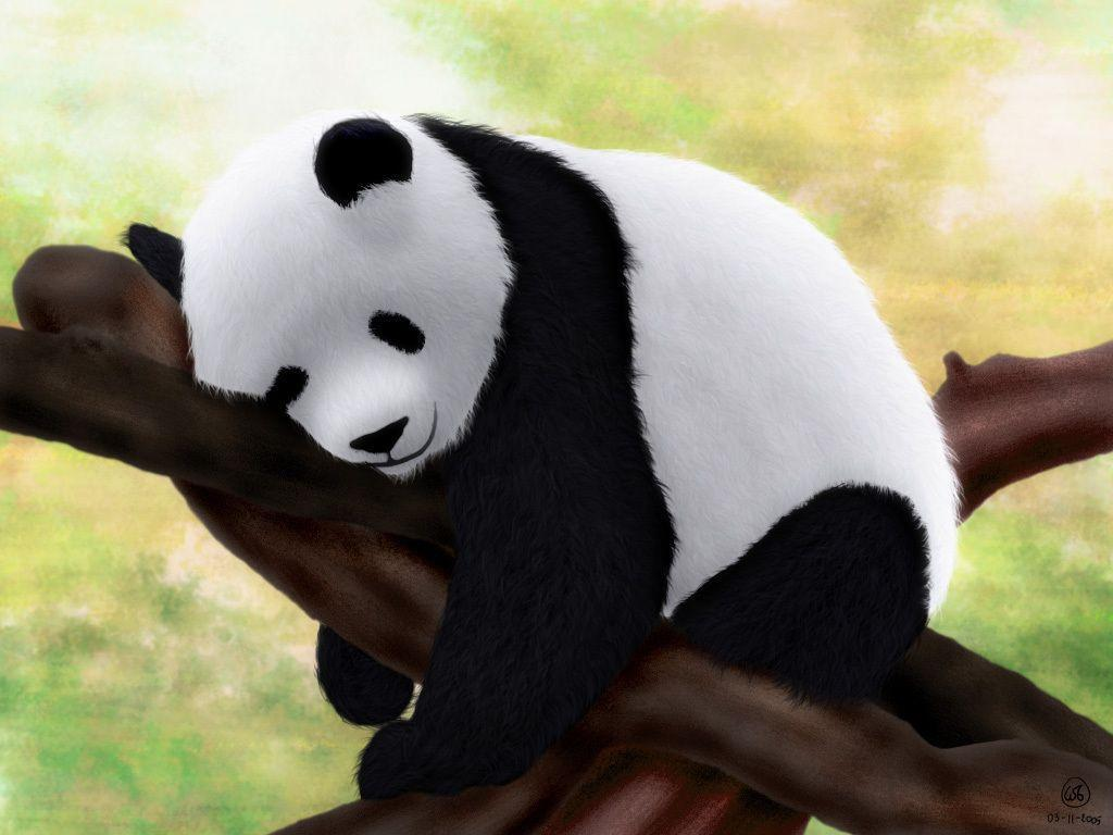 Cute Panda Hd Wallpapers For Android Apk Download