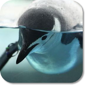 Penguin HD Wallpapers icon