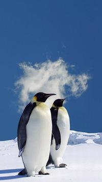 Penguin HD Wallpapers poster