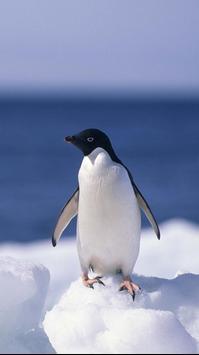 Penguin HD Wallpapers apk screenshot