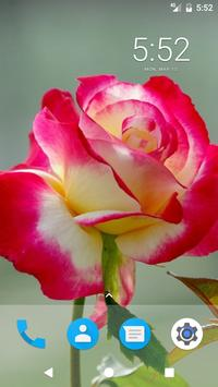 Rose Flower HD Wallpapers apk screenshot