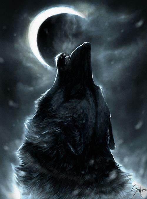 Cool Wolf Wallpapers Hd For Android Apk Download