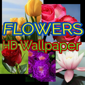 HD Wallpaper Flowers icon