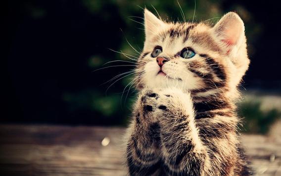 Cute Kitten Wallpaper Apk Screenshot