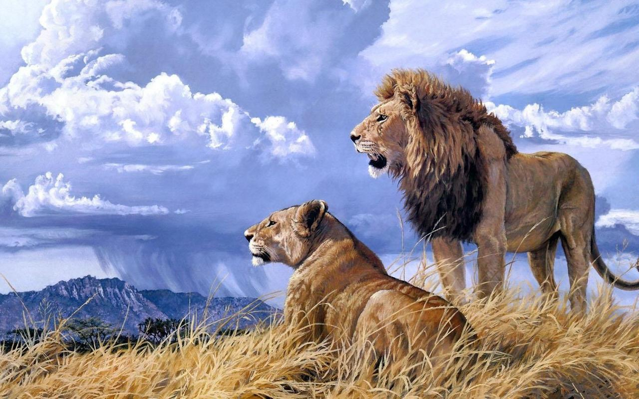 Leones Hd Wallpaper For Android Apk Download