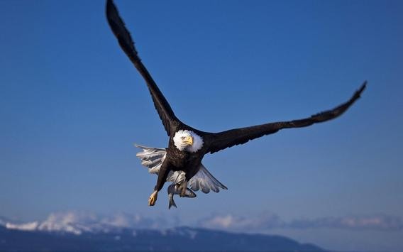 Eagle HD Wallpaper APK Download - Free Personalization APP for ...