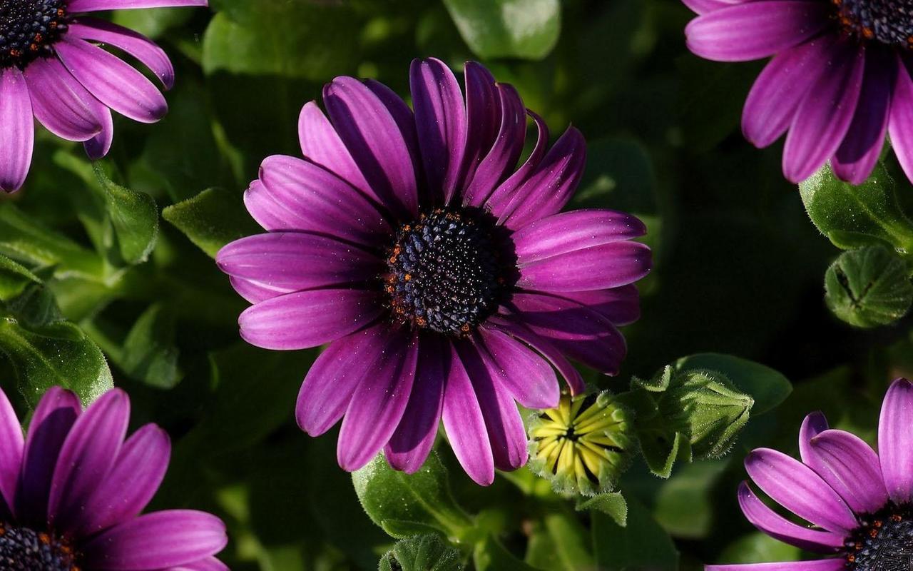 Purple Flower Wallpaper Fr Android Apk Herunterladen