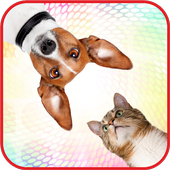 Sounds of cats and dogs icon