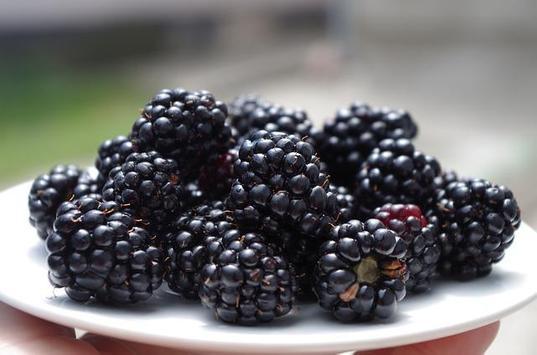 Blackberry Benefits screenshot 3
