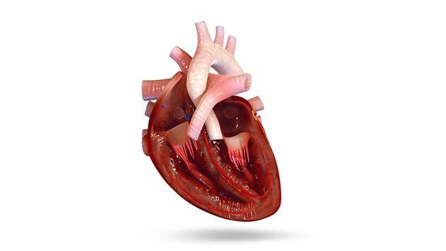 VR Human Heart poster
