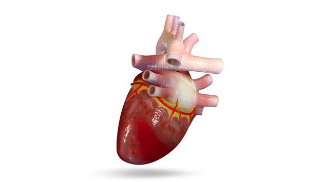 VR Human Heart screenshot 1