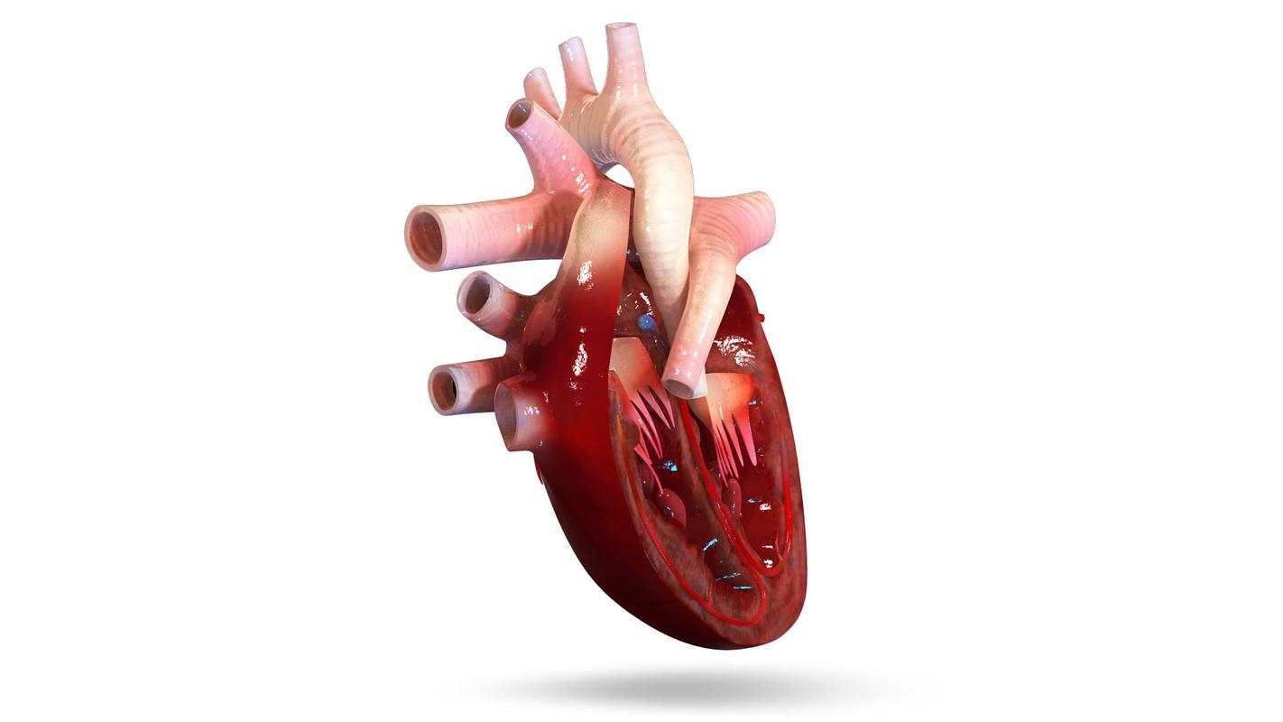 VR Human Heart APK Download - Free Education APP for Android ...