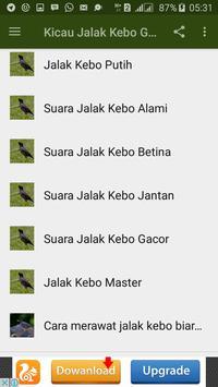 Kicau Jalak Kebo Gacor apk screenshot