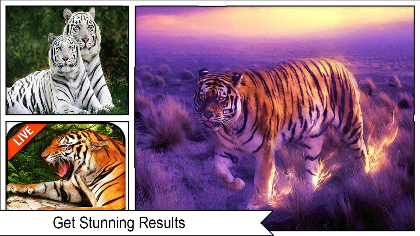 3d Tiger Wallpaper 2018 For Android Apk Download