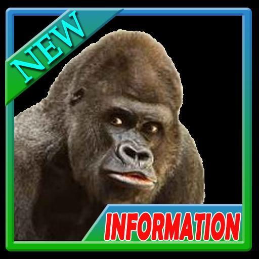 82 Download Gambar Hewan Omnivora HD Terbaru