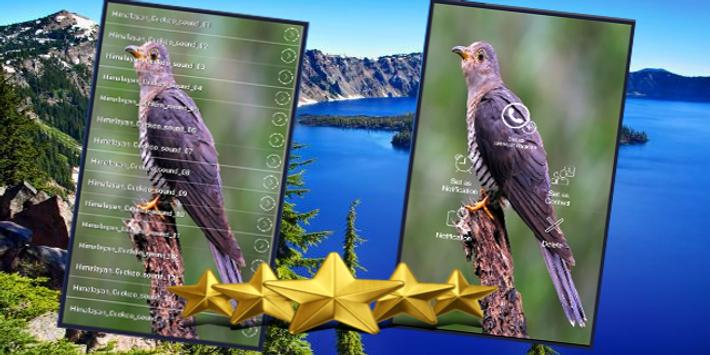 Himalayan Cuckoo Sounds : Himalayan Cuckoo Song apk screenshot