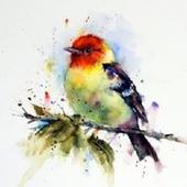 BirdsIQ icon