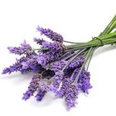 Lavendervn Fr icon