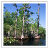 Marshes & Swamps - Wallpapers icon