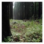 Forests - Wallpapers icon