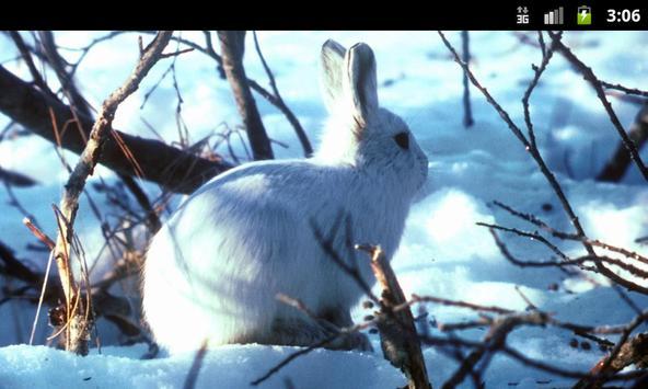 Bunny Rabbits - Live Wallpaper poster