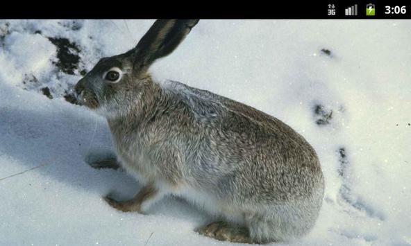 Bunny Rabbits - Live Wallpaper apk screenshot