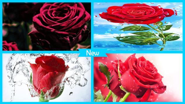 Red Roses Wallpaper HD screenshot 3