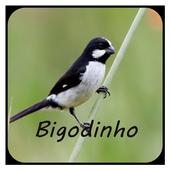 Canto Bigodinho Completo icon