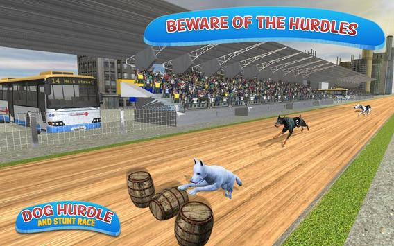 Classical Dog Hurdle Race 2017 poster