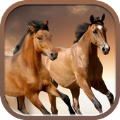 Horses slideshow & Wallpapers icon