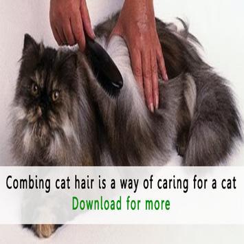 How to Care For Cats apk screenshot