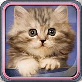 Cute Kittens Live Wallpaper icon
