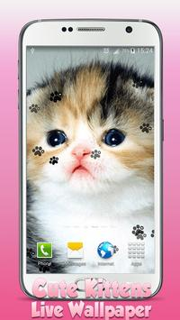 Cute Kittens Live Wallpaper poster