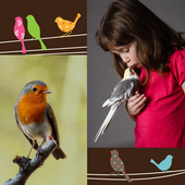 Birds Photo Collage icon