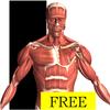 Visual Anatomy Free icône