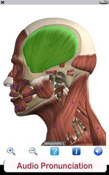 Visual Anatomy Free скриншот 20