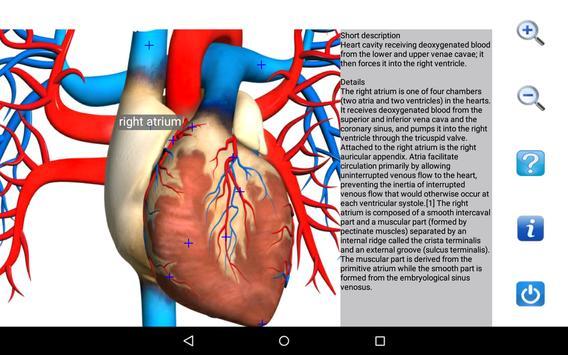 Visual Anatomy Free скриншот 12
