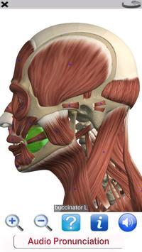 4 Schermata Visual Anatomy Free