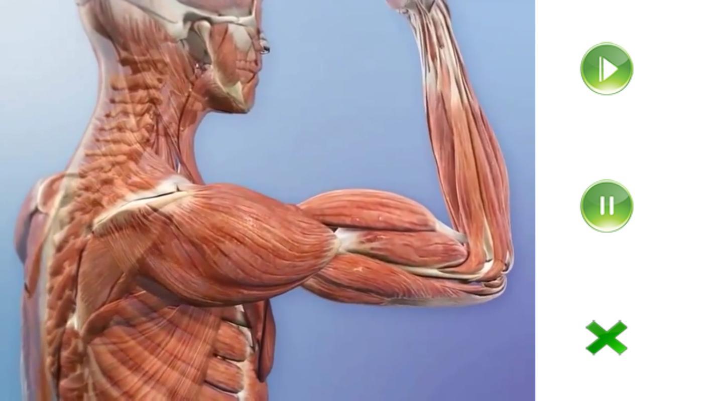 Visual Anatomy Free Descarga APK - Gratis Medicina Aplicación para ...