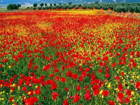 Valley Flower Live Wallpaper screenshot 2
