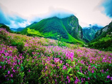 Valley Flower Live Wallpaper screenshot 4