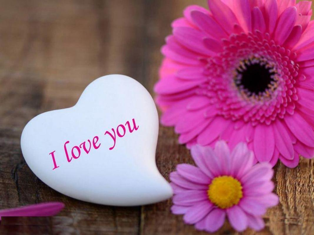 I Love You Hd Wallpapers 2018 For Android Apk Download