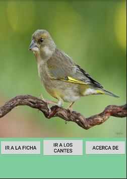 Cantes del Verderon/Verderol 2 poster