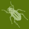 Aqua Bugs icon